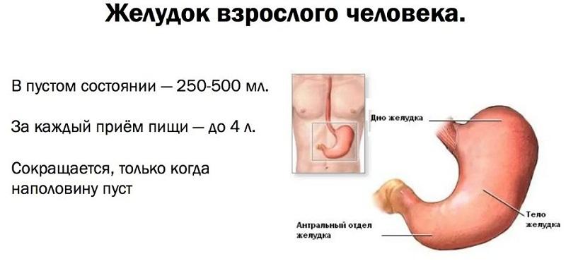 объем желудка