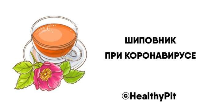 Шиповник при коронавирусе: доза витамина С